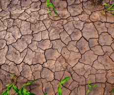 drought dry soil