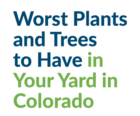 Worst Plants and Trees to Have in Your Yard in Colorado