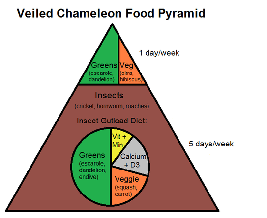 Veiled Chameleon Food Pyramid - Complete Critter