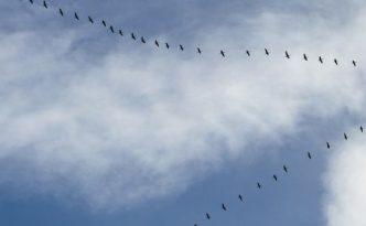 auto-organizzazione e leadership emergente