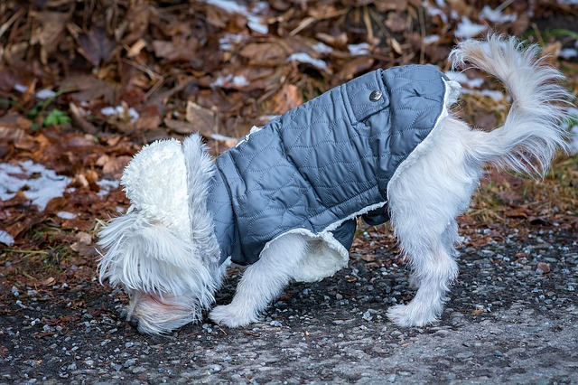 comparatif manteau chien