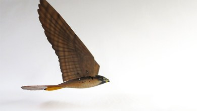 Photo of 3D Printed Falcon Is New Flying Robot Scarecrow