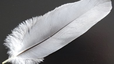 Photo of New Research Show Bird Feathers Are Similar to Carbon Fibre