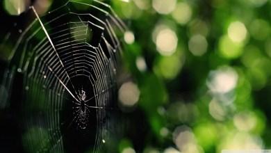 Photo of Spiders Sprayed with Nanotubes Create New Super Fibre