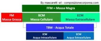 3COMP_BCM