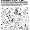 Red trófica o alimenticia del compost