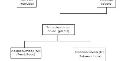 La materia orgánica en la naturaleza y su importancia como fertilizante: introducción a las Sustancias Húmicas (SH).