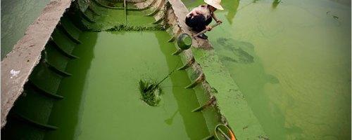 Las buenas prácticas en la fertilización nitrogenada aportan beneficios tanto económicos y ambientales.