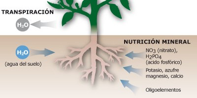 Importante cita internacional sobre el uso de bioestimulantes en agricultura