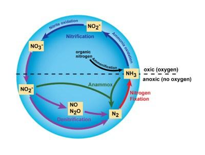 Ciclo dle nitrógeno
