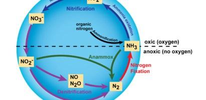 El nitrógeno, las enzimas microbianas y la agricultura