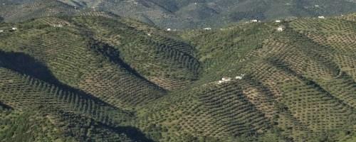 El compost de alperujo y el cultivo ecológico del olivo: el caso de Olivarera Los Pedroches (Córdoba, España)