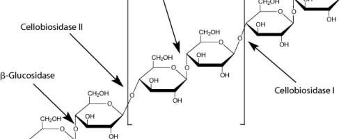 Evolución de las actividades enzimáticas durante el compostaje