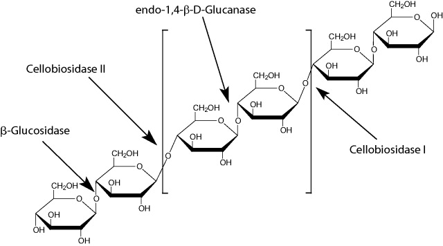 beta-glucosidasa