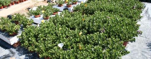 compost como sustrato de cultivo