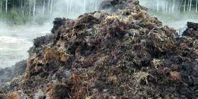 manure-antibiotics
