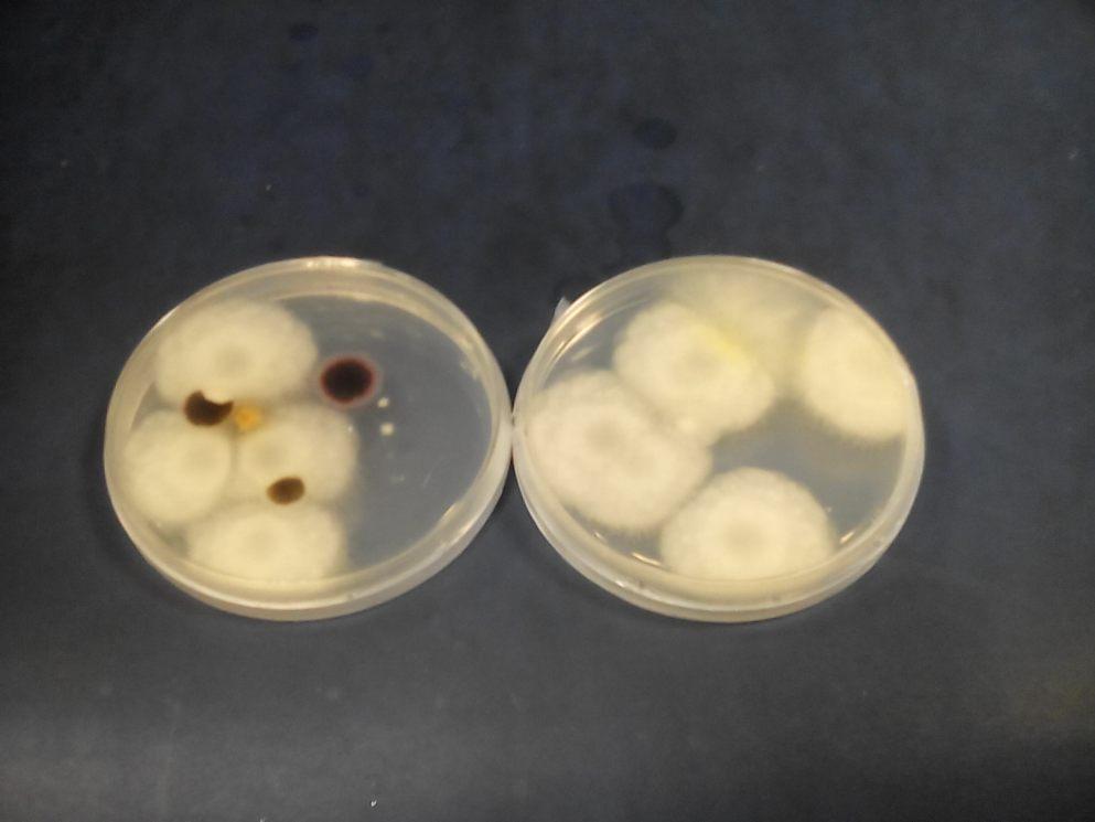 Microorganismos durante el compostaje