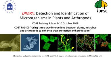 Curso para identificar microorganismos en plantas y artrópodos