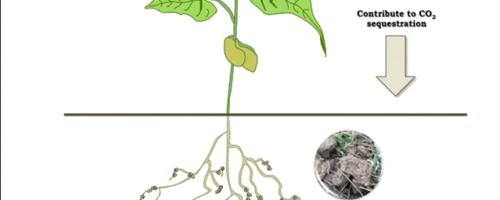 Los beneficios de las leguminosas para la agricultura