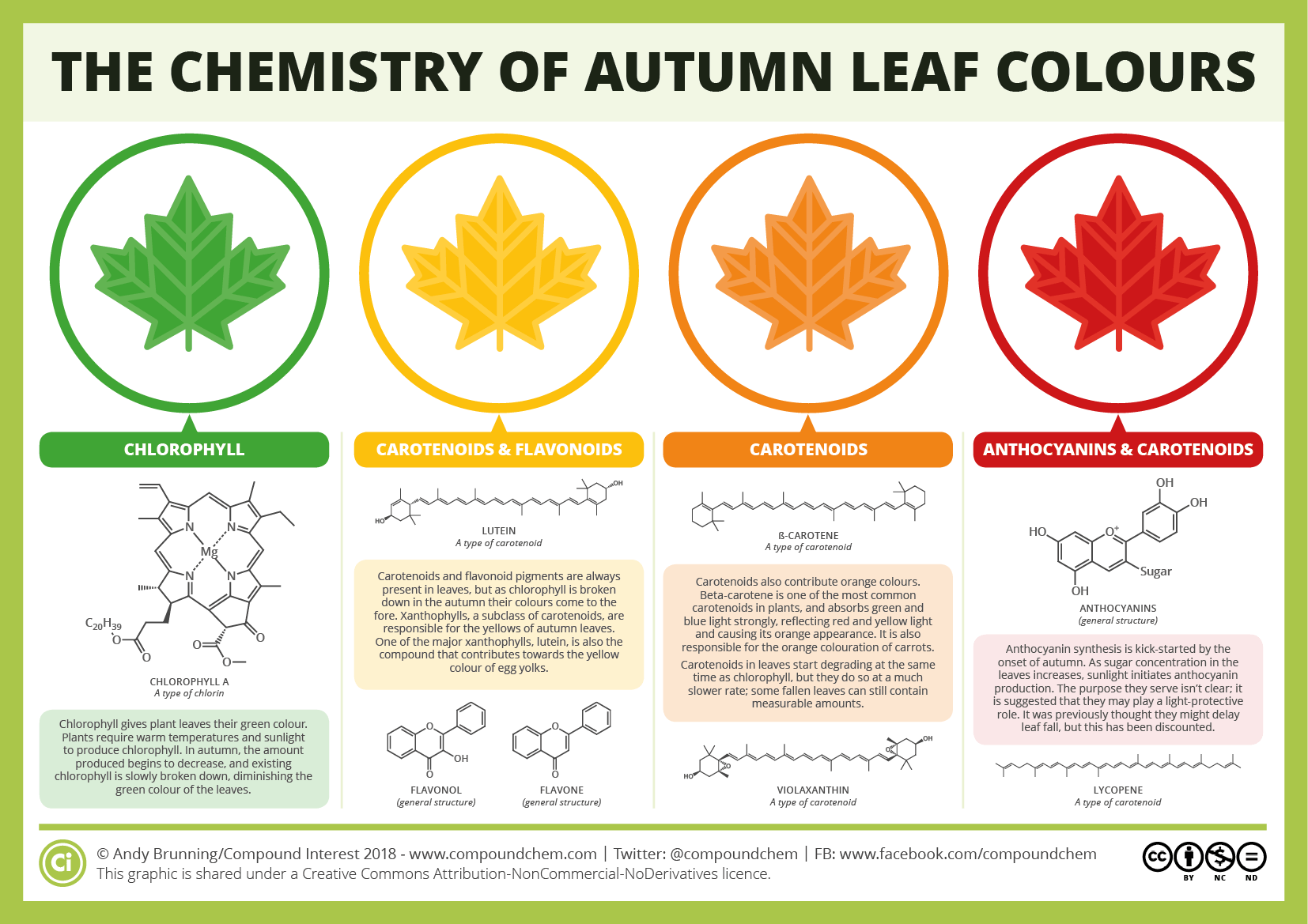 The Chemicals Behind The Colours Of Autumn Leaves
