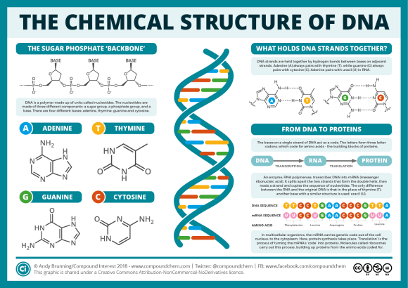 The Chemical Structures of DNA & RNA Aug 2018