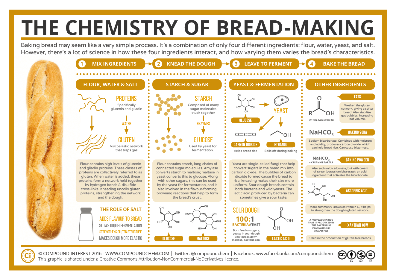 Baking Bread: The Chemistry of Bread-Making | Compound Interest