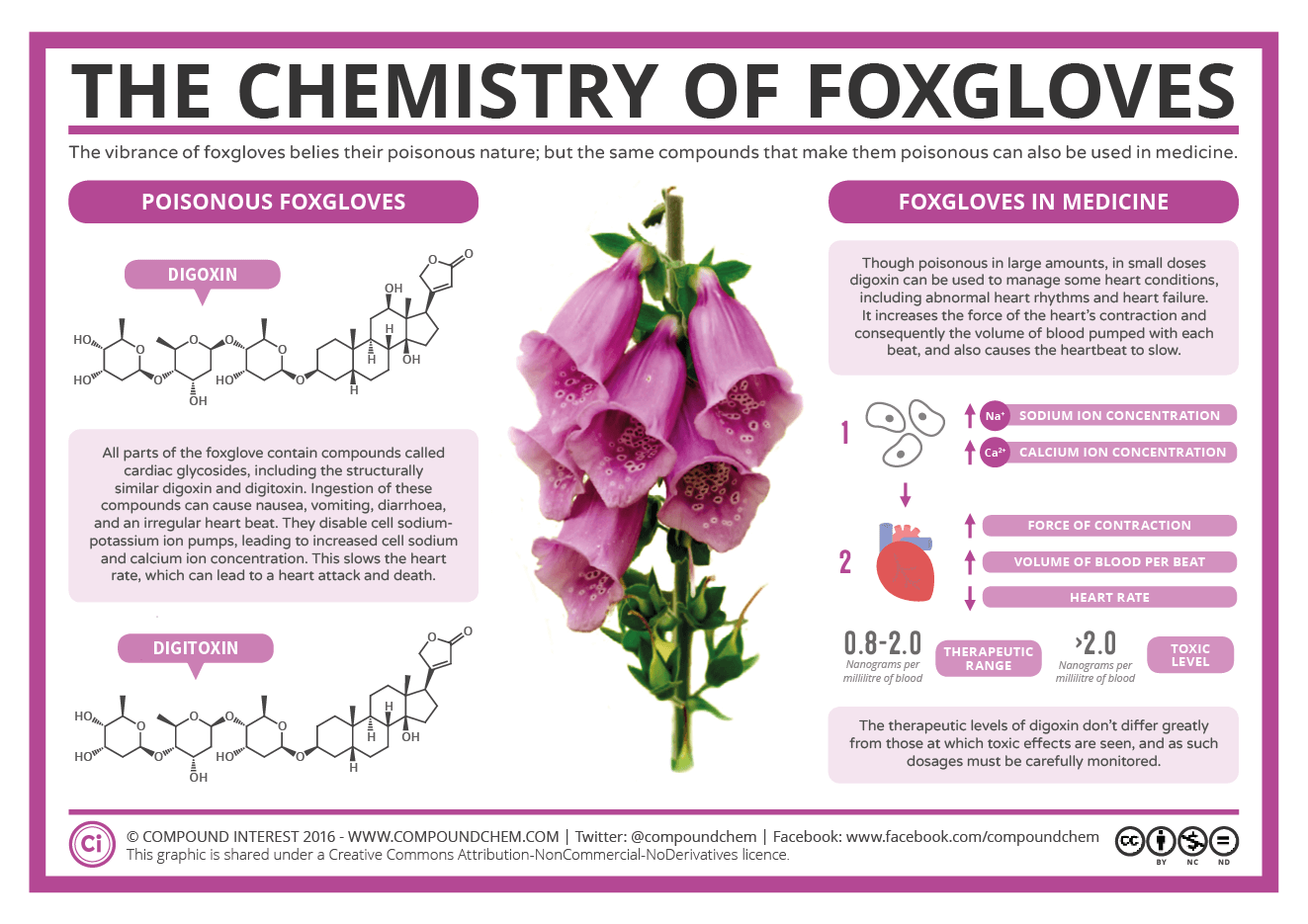 The Chemistry of Foxgloves – Poison & Medicine | Compound