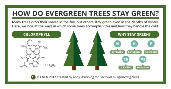 C&EN Evergreen Trees Preview