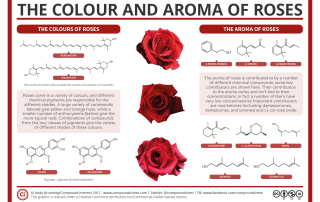 The Chemistry of Roses