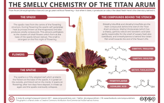 The Smelly Chemistry of the Titan Arum Corpse Flower