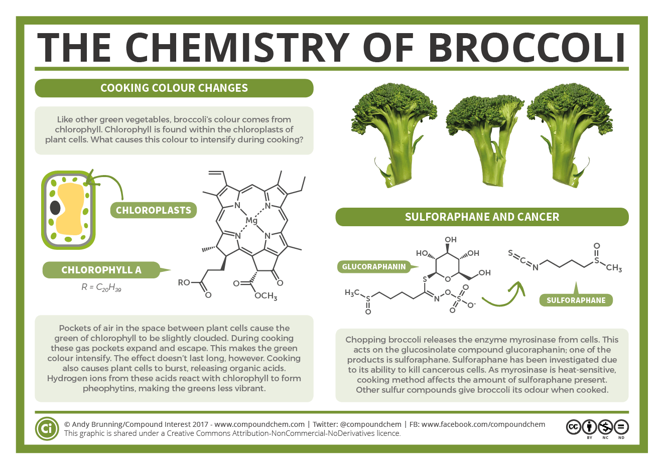 Broccoli Colour Changes And Cancer Fighting Compounds