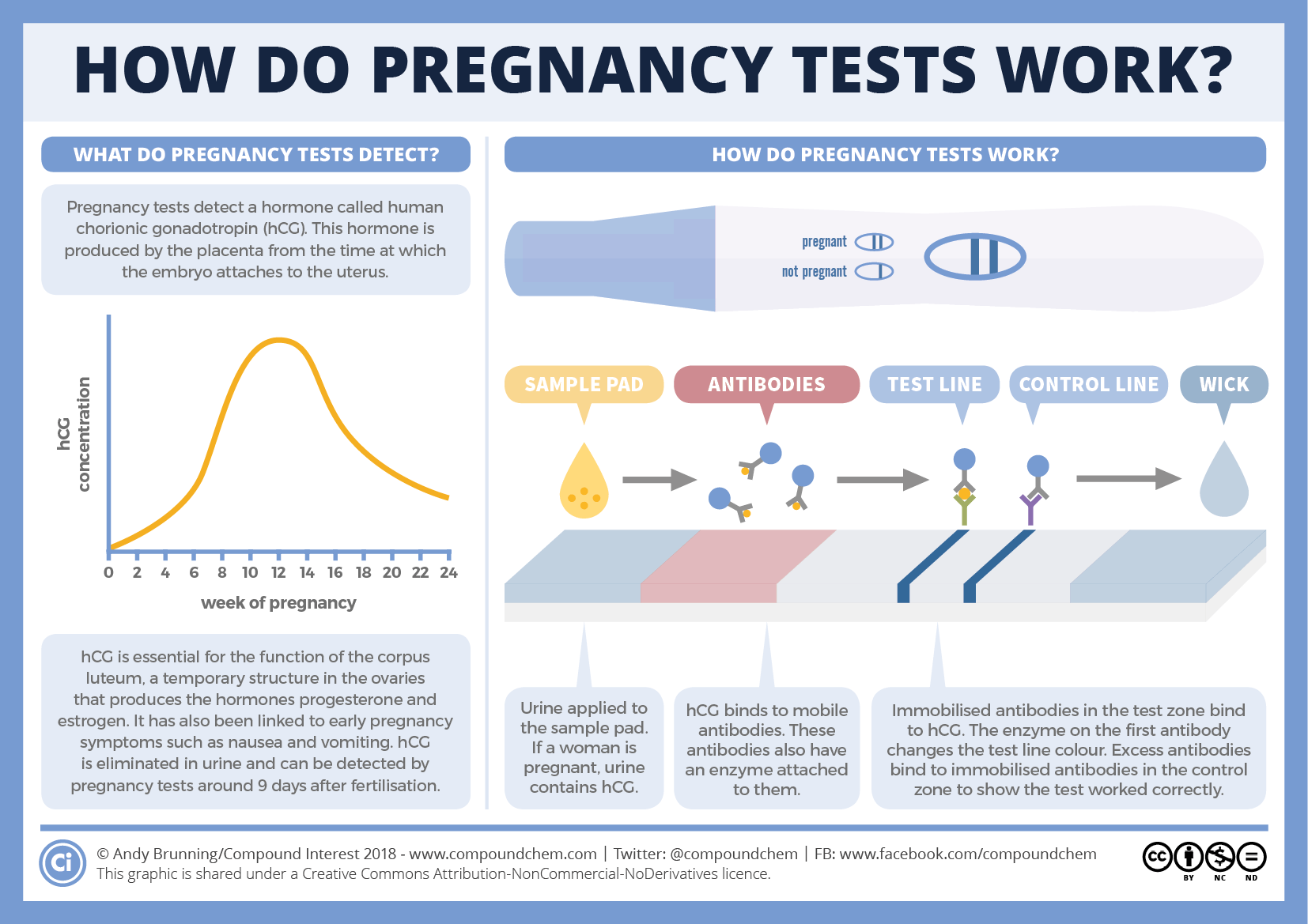 How do pregnancy tests work_