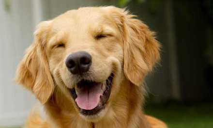 10 superalimentos que mejorarán la salud de tu perro