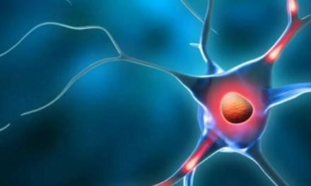 7 maneras naturales de elevar los niveles de dopamina en tu cuerpo