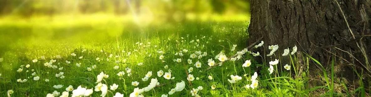 Comprar nódulos de Kéfir en primavera