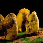 Receta de crujiente de mandioca