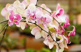 curso completo de como plantar orquideas