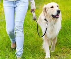 Como Adestrar Cachorro 3