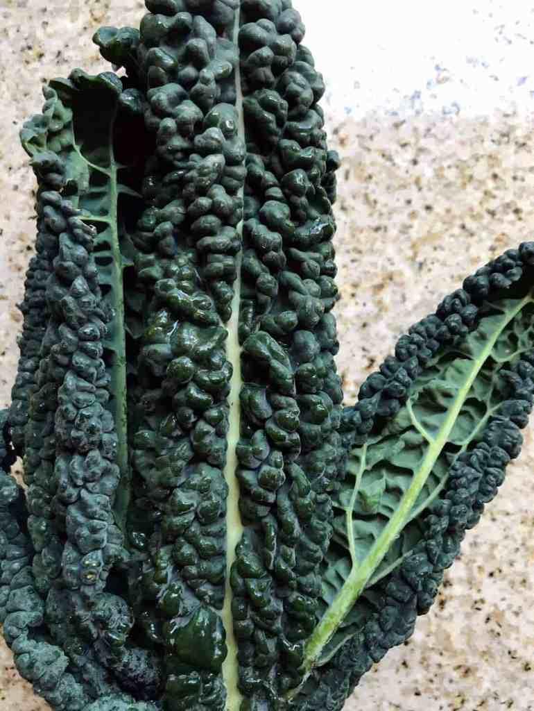 Close-up shot of dino/Tuscan kale leaves