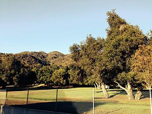 Parkland grass and trees