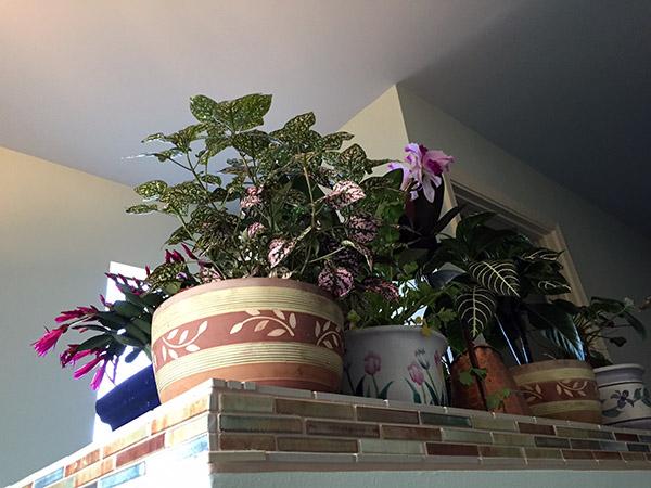 A bonanza of potted plants