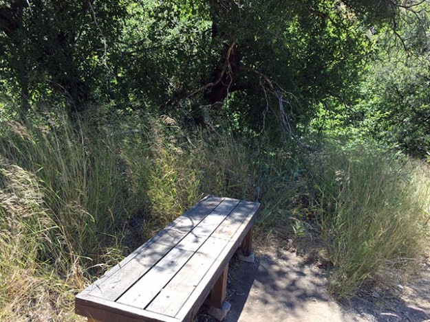 Sturdy wooden bench under a tree - you can see the tall, waving grass surrounds it.