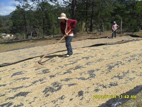 Mujeres aportando dulsura al café de los productores/as de COMSA