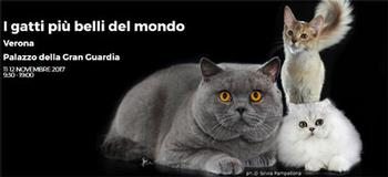 Esposizione Felina I gatti piu belli del mondo. Foto di Silvia Pampallona. Collegamento al sito dedicato