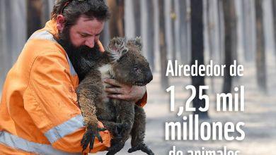 Photo of Emergenza Australia, i canoisti azzurri sostengono la raccolta fondi del WWF
