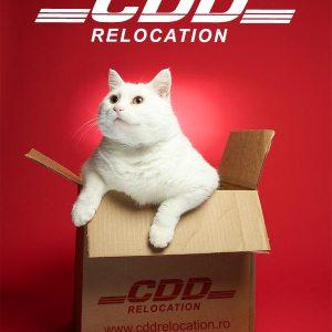 www.CDDRelocation.ro