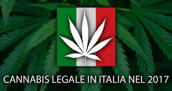 cannabis legale nel 2017