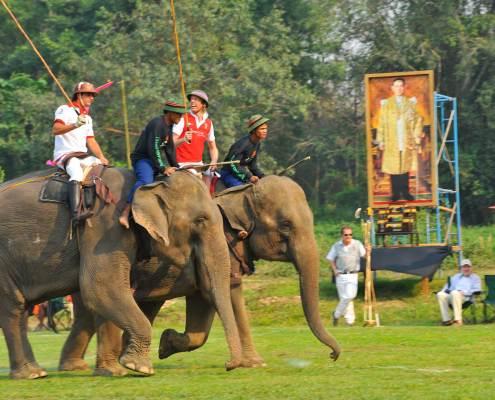 Copa del Rey de Polo en Elefante - Tailandia