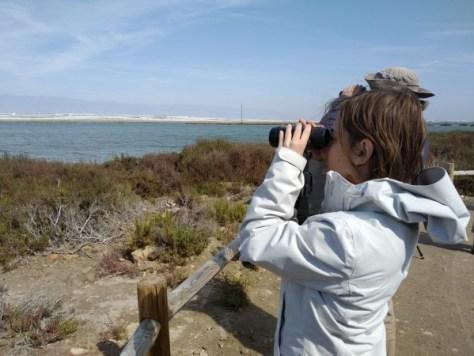 Los humedales costeros, el hogar del Ave del Año 2019