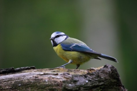 cajas nido, refugios de biodiversidad